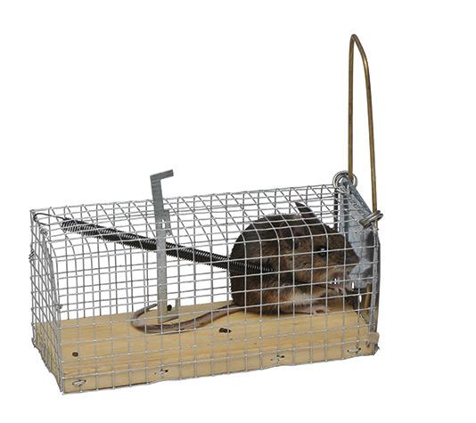 Jaula trampa ratones finca casarejo - Trampas de ratones ...